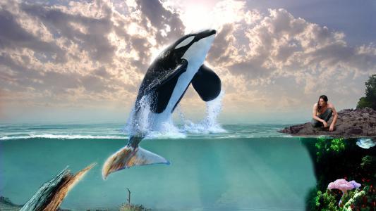 海豚,3d,艺术。