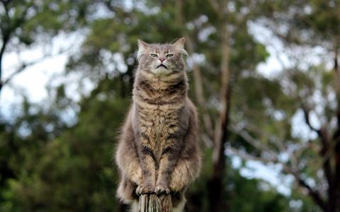 猫,宏观照片,性质