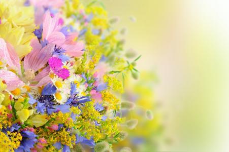 夏天,花束,滴,花瓣,花,雏菊