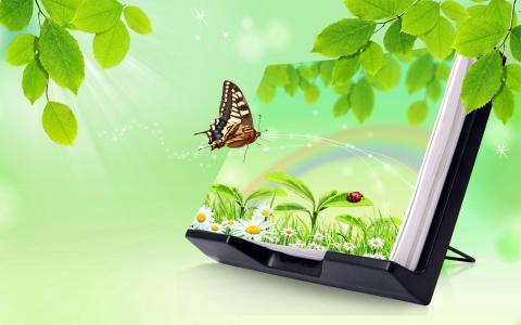 光线,叶子,蝴蝶,洋甘菊