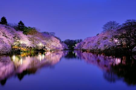 日本,大阪,自然,樱花,性质,晚上,灯,花,湖,反射,天空