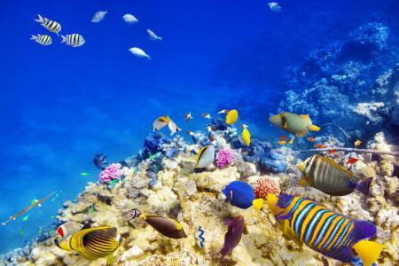 照片,水下,鱼,美丽