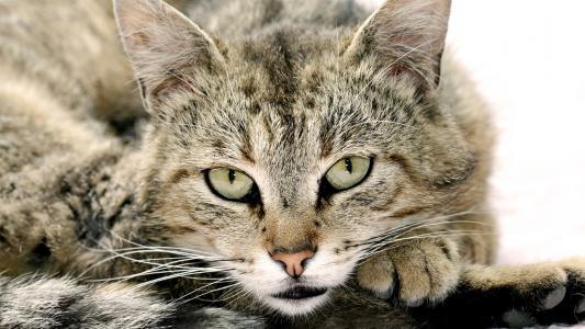 壁纸,动物,猫,看