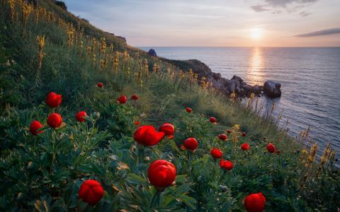 海,岸,鲜花,天空,云,日落,石头