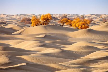 新疆塔克拉玛干沙漠自然景观