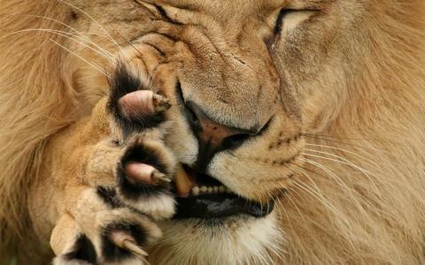 方,口,爪,羊毛,枪口,鬼脸,狮子,爪子