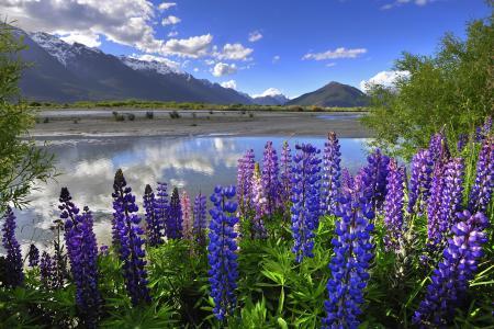 新西兰,山,云,湖,羽扇豆,蓝色