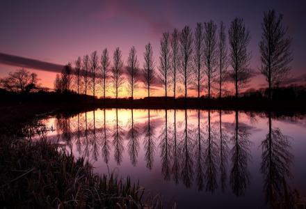 树,英格兰,英国,行