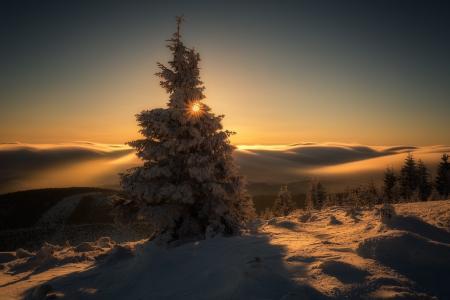 冷杉,雪,山,天空,地平线,太阳,Iza,Darek