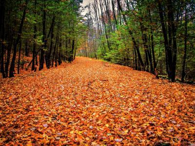 秋天,性质,叶子,树木,大卫·马哈拉哈什维利