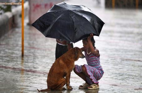 孩子,印度,雨,狗,伞,帮助,积极,照片