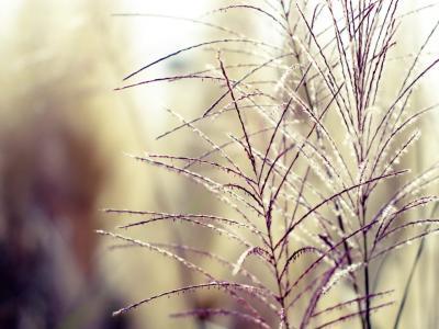 草,田地,温柔,模糊