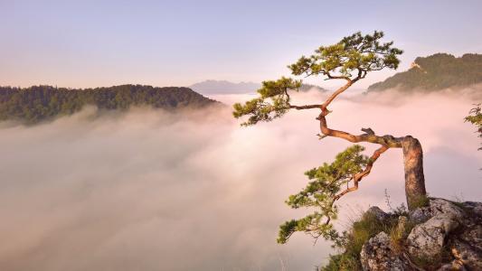 树,山,天空,雾,顶部,森林,美女