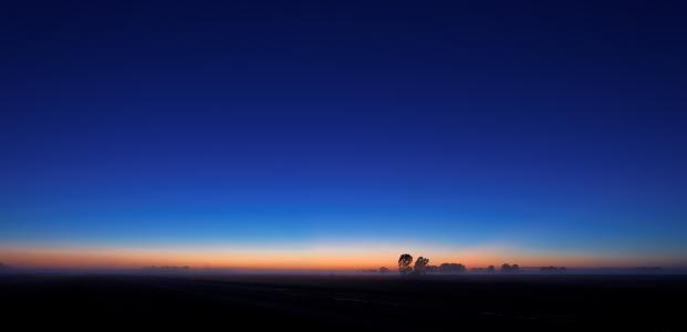 树,日出,天空,阴霾,地平线
