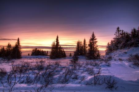 冬天,日落,雪,树,景观