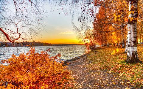 树,日落,秋,景观,叶子,湖,性质