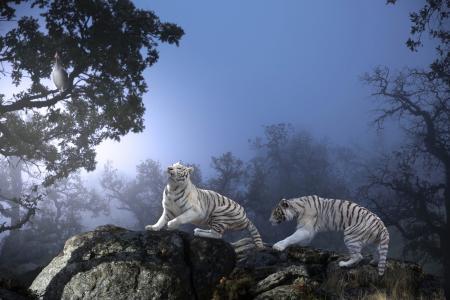 泰国的Phung,动物,掠食者,老虎,自然,石头,树木