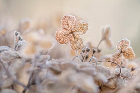 秋天,叶子,花朵,白霜,霜冻