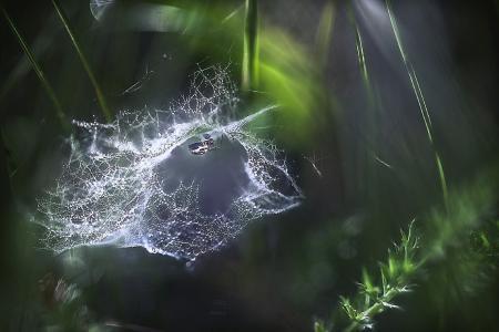 蜘蛛网,蜘蛛网,宏,加林娜Yunyaeva