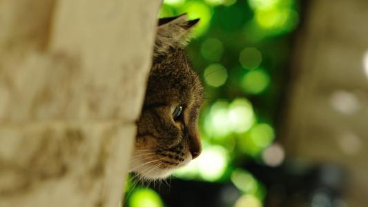 宏观照片,猫,捕食者