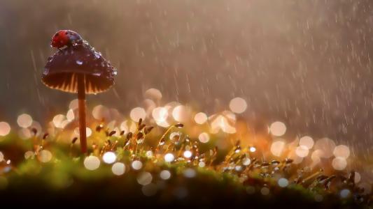雨,滴,夏天