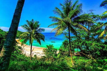 海滩,海洋,热带,棕榈树,性质