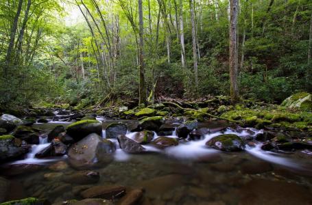 茂密,森林,溪流,树木,水,溪流,绿叶,美景