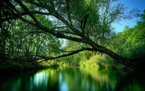 树,绿化,河,夏天