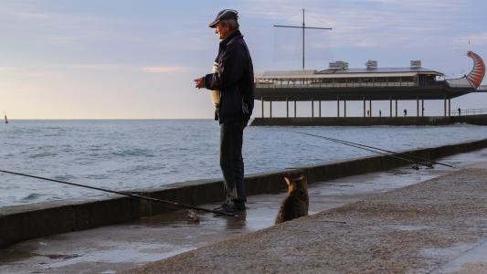 猫,渔夫,雅尔塔,路堤,海,早上