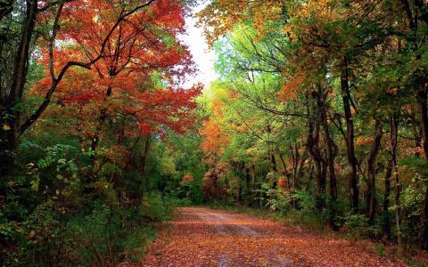 性质,秋季,森林,树木,叶子,路,天空