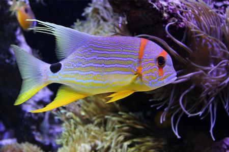 美丽的鱼,水下,海,珊瑚