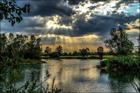 自然,湖,灌木丛,夏天