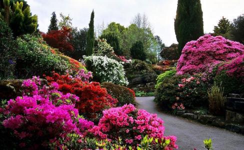 自然,公园,胡同,灌木丛,开花,杜鹃花