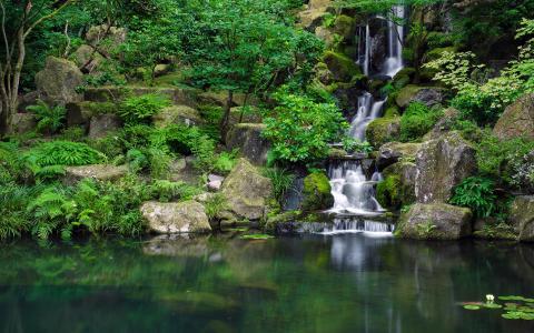 自然,流,岩石,石头,莲花,夏天