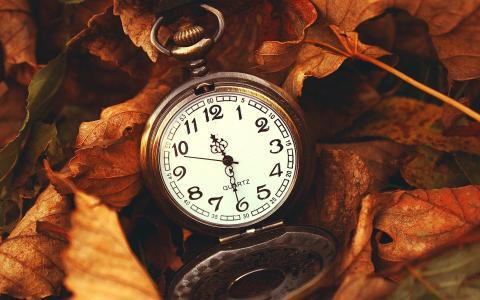 壁纸,宏,叶子,时钟