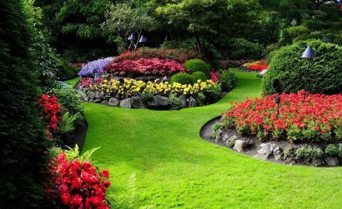 自然,公园,花圃,鲜花,石头