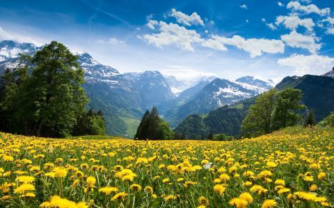 自然,山,阿尔卑斯山,鲜花,蒲公英,森林,天空,云