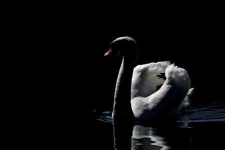 MMaglica,照片,MMaglica照片,黑暗,湖,天鹅,美丽,和平
