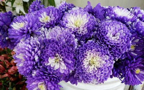 花,菊花,白,紫罗兰