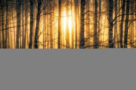 性质,秋季,芬兰,照片,劳里Lohi,早晨,日出,森林,桦木