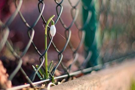 宏,花,篱笆