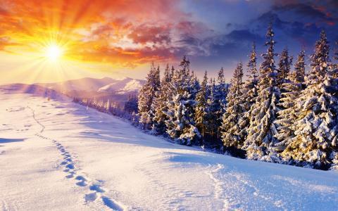 痕迹,雪,景观,太阳,冷杉,冬天