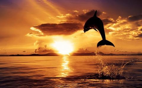 海豚,海,太阳,喷雾