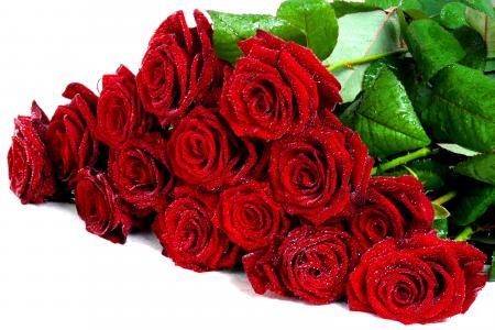 酷,花,花束,湿,玫瑰,滴,玫瑰,不错,鲜花,美丽,漂亮,可爱,红玫瑰