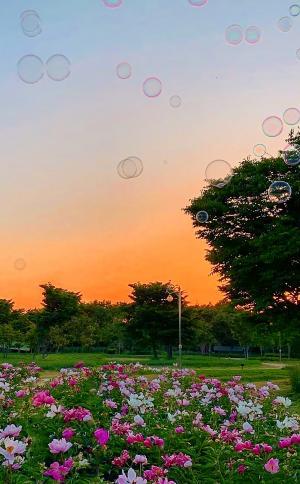 公园落日夕阳摄影风景