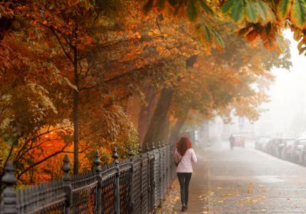 Gordeev爱德华,城市,街道,道路,围栏,秋季,女孩,树,树叶,光线