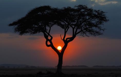晚上,大草原,景观,肯尼亚,非洲,日落,树