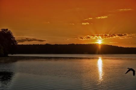 日落,天空,森林,水,湖,美女,鸭,剪影