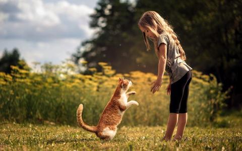 女孩,猫,朋友,性质,宏观照片,主题,积极