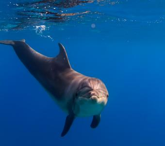 照片,水下,海豚